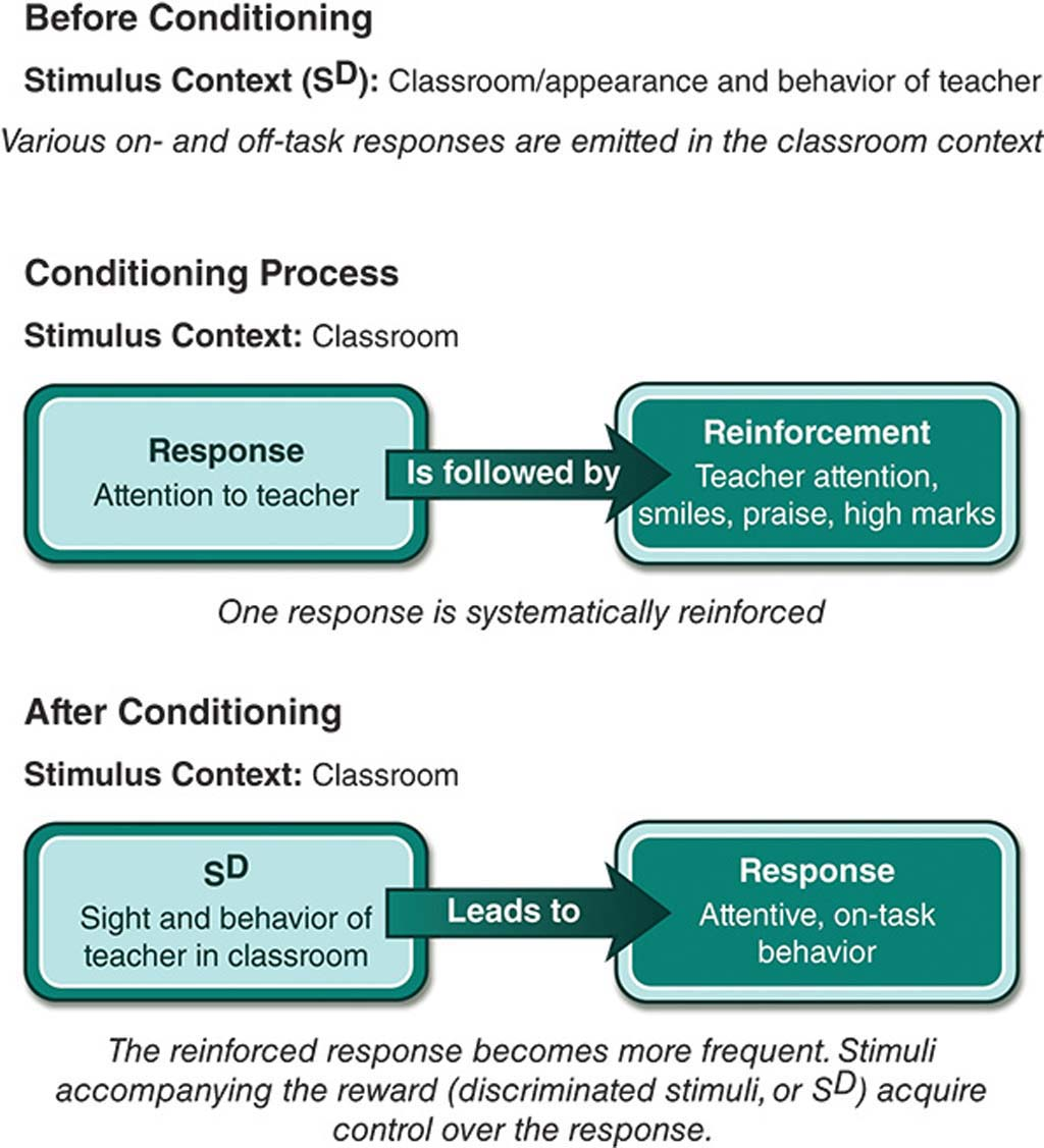 Figure showing the process (before, during and following) of operant conditioning as applied to the rankroom.